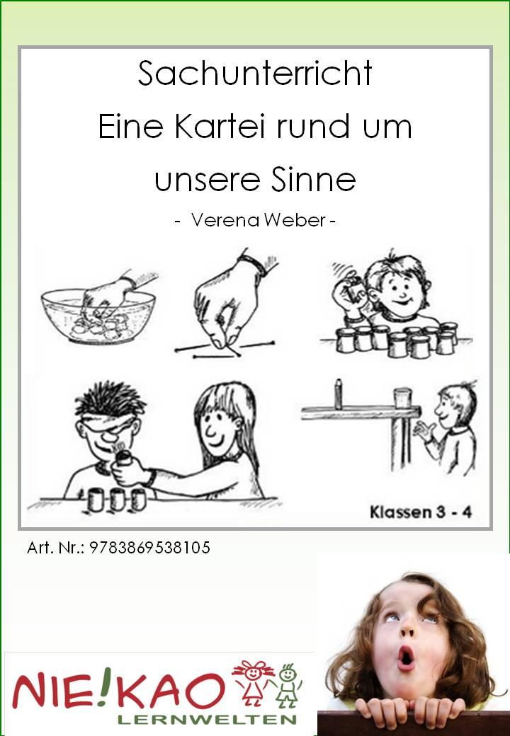 Fledermaus  Steckbrief  Tierlexikon