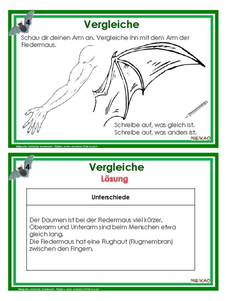 download Heidelberger Gelehrtenlexikon 1933-1986 2009